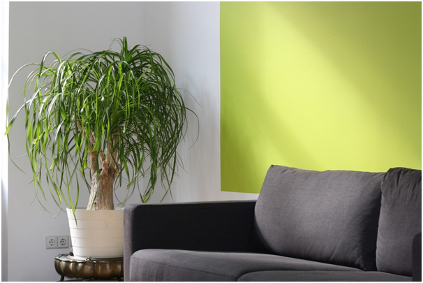 Why green plants are great for the office